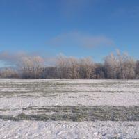 О закрытии сезона поиска монет по снежку на поле