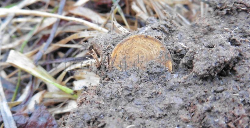 Поиск монет в Заречном парке. Свежий отчет! + видео!