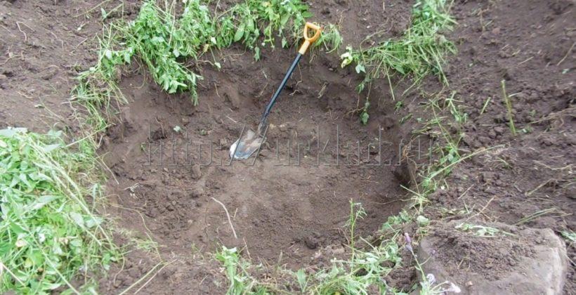 Шурф фундамента и поиск монет на свежеубранном поле возле старинной деревни. Отчет с длинного копа!