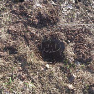 Поиски монет на поле или шурф фундаментов? Настоящее и будущее копа.