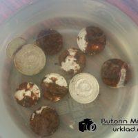 Чистка серебряных монет лимонной кислотой