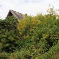 Почему я взялся за проект с восстановлением дома и деревни?