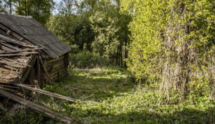 Выкашиваю двор и ищу старый родник за рекой