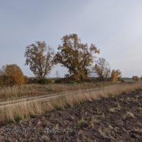 От неё остались лишь большие тополя. Деревня Ветошкино Уржумского района