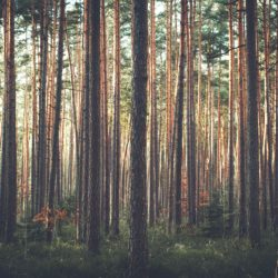 Правила поведения при встрече с лесными животными