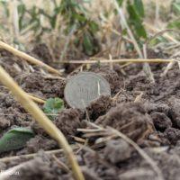 Тучи, стерня и царские монеты. Прогулка по свежеубранному полю