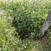 Чем опасны старые колодцы в деревнях?